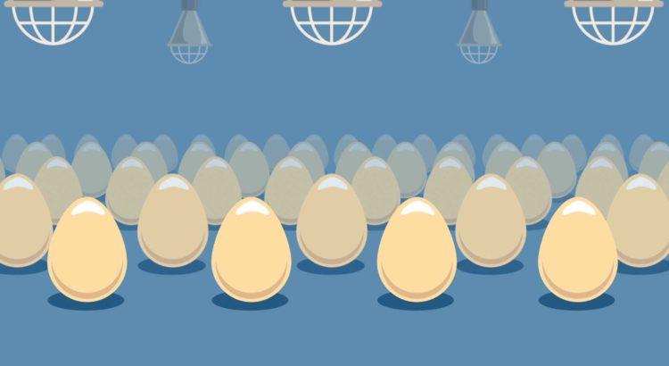 in-ovo-breeding-eggs-hatchery